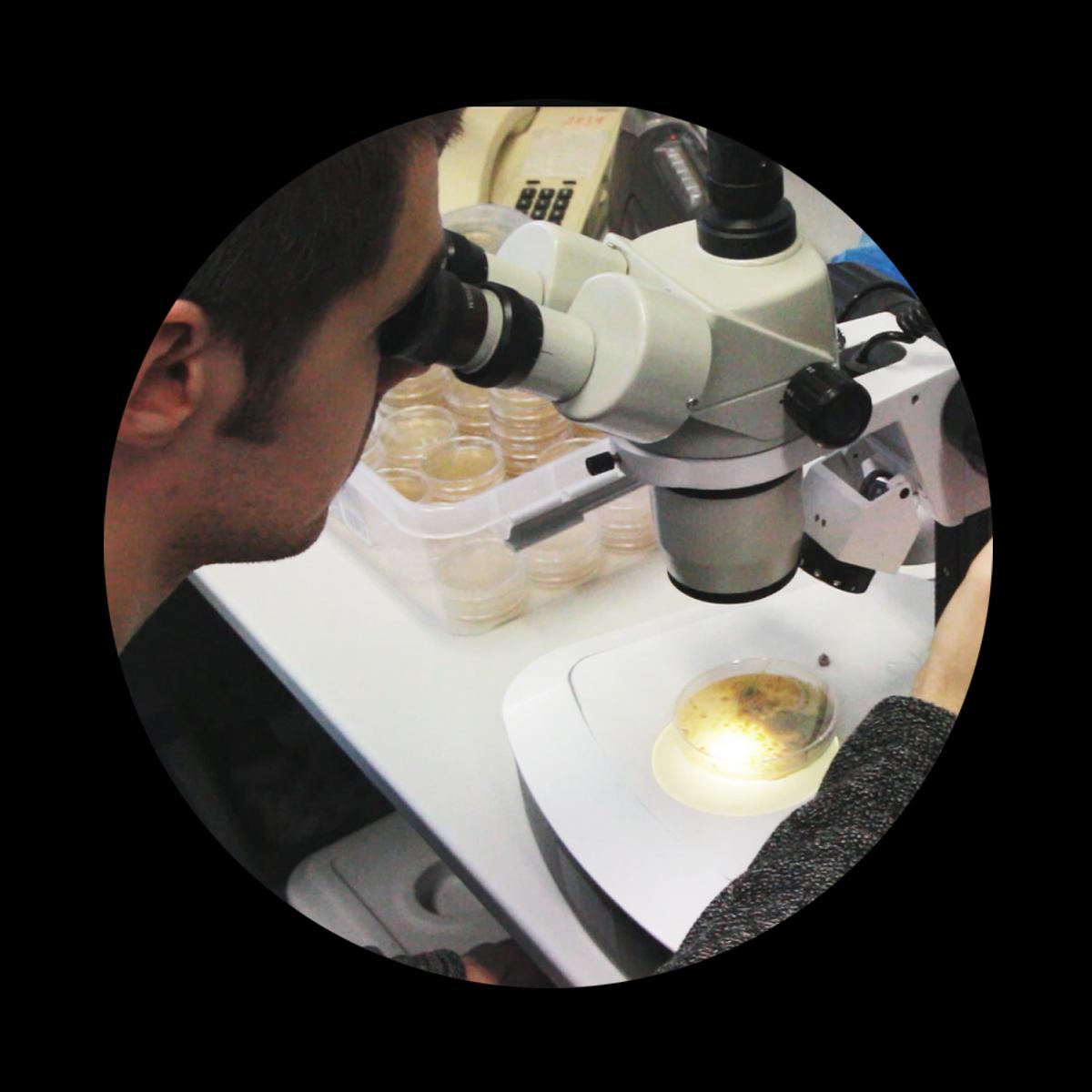 Jakub Trčka   BOT - Biologization of tectonics